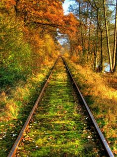 """FALL--Railroad track--November 23rd is my guess. """"D""""ebbie"""