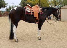 Pretty pony!