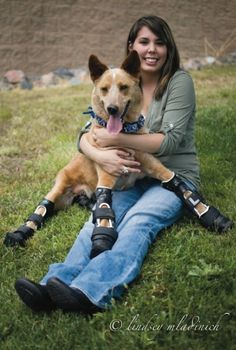World's First 'Bionic' Dog With Four Prosthetic Legs - DesignTAXI.com