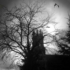 Release the bats by Heather King Dark Photography, Black And White Photography, Heather King, My Images, Fine Art America, Creepy, Bats, Darkness, Wall Art