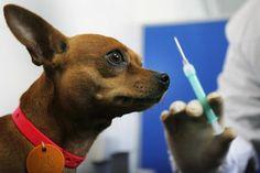 puppies  Vacinas para Cães