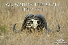 Kruger National Park, waiting for a call Kruger National Park, National Parks, Waiting, Memes, Animals, Pictures, Animales, Animaux, Meme