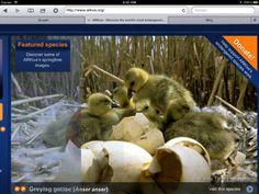 Mobicip Safe Browser, el navegador ideal para los niños | iPad Books