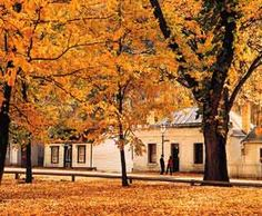 Arrowtown, Central Otago, New Zealand - one of the few places in New Zealand with true autumn colours. Autumn In New Zealand, Arrowtown New Zealand, The Lord Of The Rings, Places Ive Been, Places To Go, Central Otago, Shades Of Gold, South Island, Cool Countries