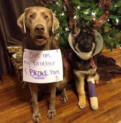 Aww poor doggie so dog gone funny funny animals, dogs, cute Cute Funny Dogs, Funny Dog Memes, Funny Animal Memes, Cute Funny Animals, Funny Animal Pictures, Cute Baby Animals, Funny Dog Shaming, Cat Shaming, Dog Pictures