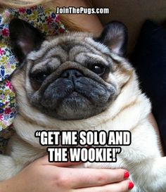 Jabba the Pug - Join The Pugs