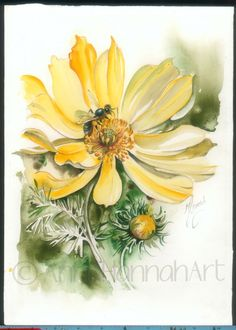 Adonis Vernalis yellow flower heart cure health by AnnaHannahArt