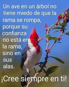 Positive Phrases, Spanish Quotes, True Quotes, Nostalgia, Feelings, Health, Animals, Truths, Vestidos