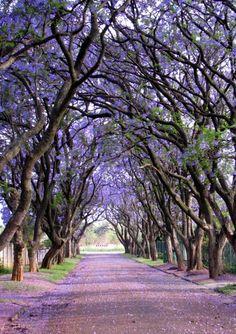 Calles enlas que laprimavera noescatimó encolores. Cullinan, Sudáfrica