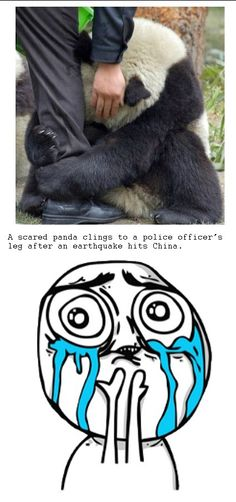 Im pretty sure I made that face after looking at the picture and reading the caption. Poor baby panda!!!