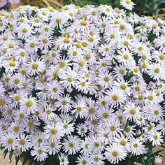Lavender Garden Cottage: 15 Blooms for a White Garden
