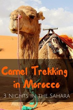 Stories, tips and recommendations on camel trekking through the Sahara's golden sand dunes of Erg Chebbi. 3 Nights in the Sahara: Camel Trekking Morocco - FreeYourMindTravel: