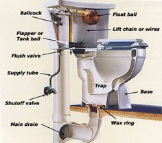 Everything you needed to know about the anatomy of a toilet... A good reference for your next #DIY fix. #FischerPlumbing