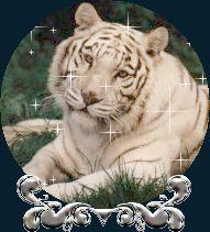 Animación de tigre blanco echado sobre el pasto