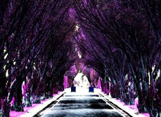 Enchanted Pathway  Purple Dublin Ireland by candymountainphotos, €14.00