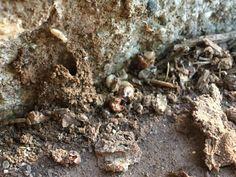 Even more termites