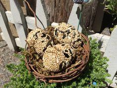 3 eggs in nest.JPG