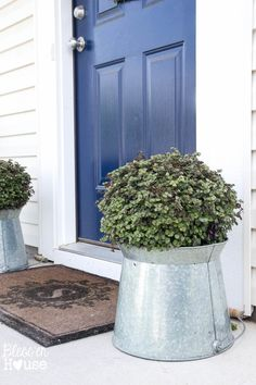 Bolivian Jew Ivy in galvanized buckets used as door pedestals