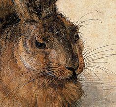 Albrecht Dürer ~ A Young Hare (detail), 1502