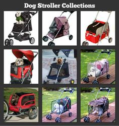 Find the dog stroller that best fits your dog's needs.