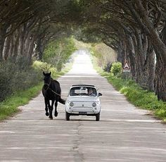 my dream car Fiat Cinquecento, Fiat 500c, Vespa, My Dream Car, Dream Cars, Fiat 500 Lounge, Fiat 500 Pop, Fiat Cars, City Car
