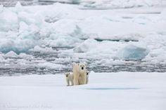 El Ártico está amenazado por el petróleo, la pesca industrial y los conflictos entre naciones. ¡Tú puedes Salvar el Ártico! www.salvaelartico.org