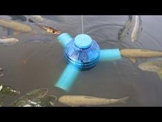 Smart Girl Make PVC Pipe Deep Hole Fish Trap To Catch A Lot Of Fish - Khmer Fishing At Siem Reap - YouTube