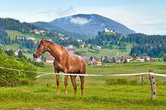 Loški potok in konj