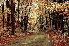 Title  Autumns Dressing  Artist  Marcia Lee Jones  Medium  Photograph - Photography