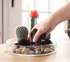 succulents et cactus pour jardin intérieur - tutoriel