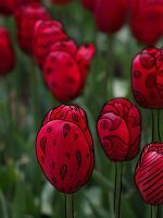 Red Tulips by Dreamidaisy