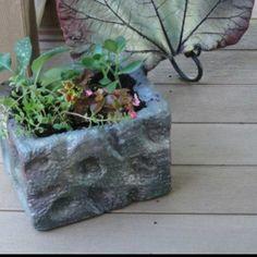 Styrofoam cooler planter and ceramic rhubarb plant
