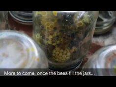 Mason Jar Bee Super Update - YouTube