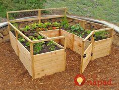 19 užitočných nápadov ako dopestovať v malej záhrade bohatú úrodu a množstvo krásnych kvetov!