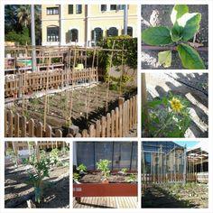 L'hort del Garden Arenas inicis Maig 2014