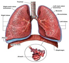 Asbestosis symptoms are typical of the symptoms of many forms of respiratory illness, but unfortunately they indicate one of the most serious forms of lung illness you can get.