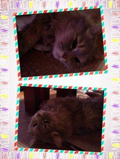愛猫さくら姫|SHOOP+FACTORY(シュープ・ファクトリー)@オーナーブログ-184ページ目
