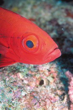 We happened upon this little fish at Four Seasons Resort Maldives at Kuda Huraa.