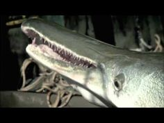 River Monster by Animal Planet