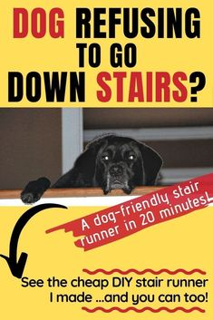 Cheap DIY Dog Stair Runner - Suddenly our dog started refusing to walk down stairs in our home. (Hardwood, not carpeted.) See my DIY stair runner solution. It has worked for us for 10 years now... and counting!