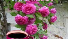 Αποκλειστικές εικόνες με λόγια για καλημέρα.! - eikones top Good Morning, Rose, Flowers, Plants, Buen Dia, Pink, Bonjour, Plant, Roses