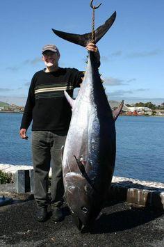 CAN LABEL VINTAGE TUNA FISH 1930S ORIGINAL ATHLETE CHINOOK WASHINGTON ALBACORE
