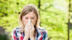 Pic d'allergies au pollen d'ambroisie