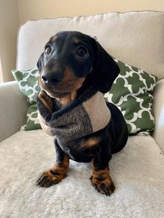 0ccbd62999c 16404 Best Dachshunds images in 2019