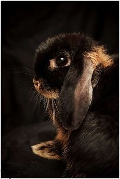brown rabbit | Very cool photo blog