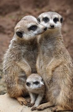Wild Animals Pictures, Funny Animal Pictures, Jungle Animals, Baby Animals, Wildlife Photography, Animal Photography, Most Beautiful Animals, Mundo Animal, Cute Little Animals