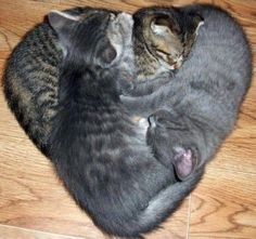Kitty love-in
