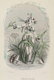 Flèche d'Eau - Les Fleurs Animées - JJ Grandville | by peacay