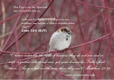 """""""Matthew """"Observe intently the birds of heaven; they do not sow seed or reap or gather into storehouses, yet your heavenly Father feeds them. Are you not worth more than they are? Prayer Changes Things, Watch Over Me, Prayer Request, Heavenly Father, His Eyes, Word Of God, Conversation, Prayers, Spirituality"""