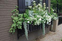 composition jardinière été de fleurs blanches et plantes vertes pour décorer la fenêtre